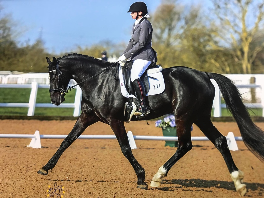 Area 5 Equi-Theme Winter Intermediate Team & Individual Dressage Qualifier